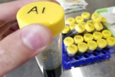 Newlox heralds the potential of OAR gold leaching technology following test work